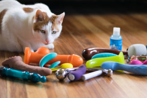 Cat blog takeover commence. Cats review sex toys?