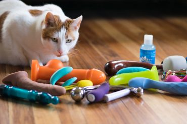 My cat Chowder overseeing a pile of sex toys.