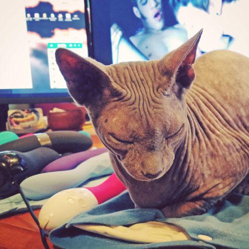 Boris happy on his heating pad next to my pile of vibrators.