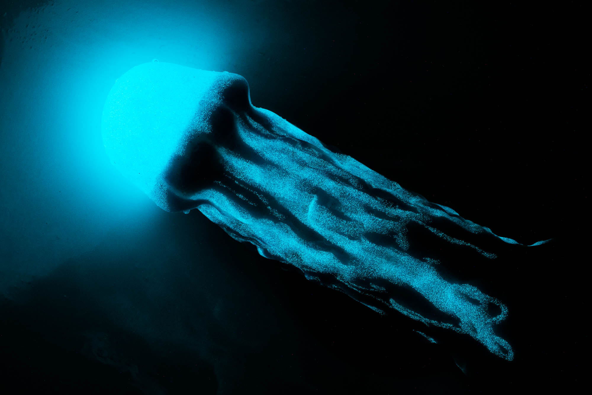 Uberrime Jellyfish 2.0 silicone dildo glowing in the dark! It looks like it's dripping blue!