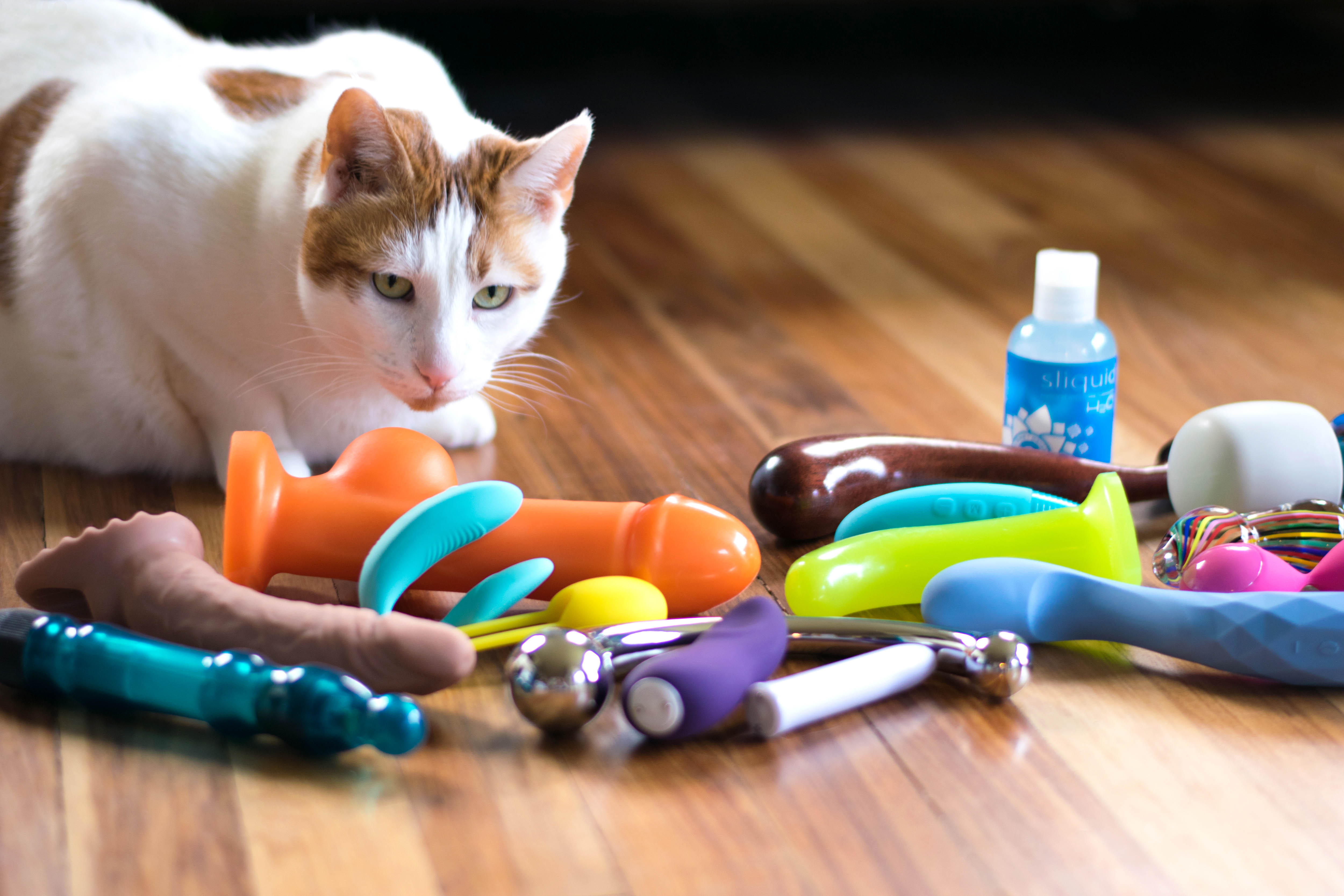 My huge cat Chowder with a bunch of sex toys splayed out on the floor.