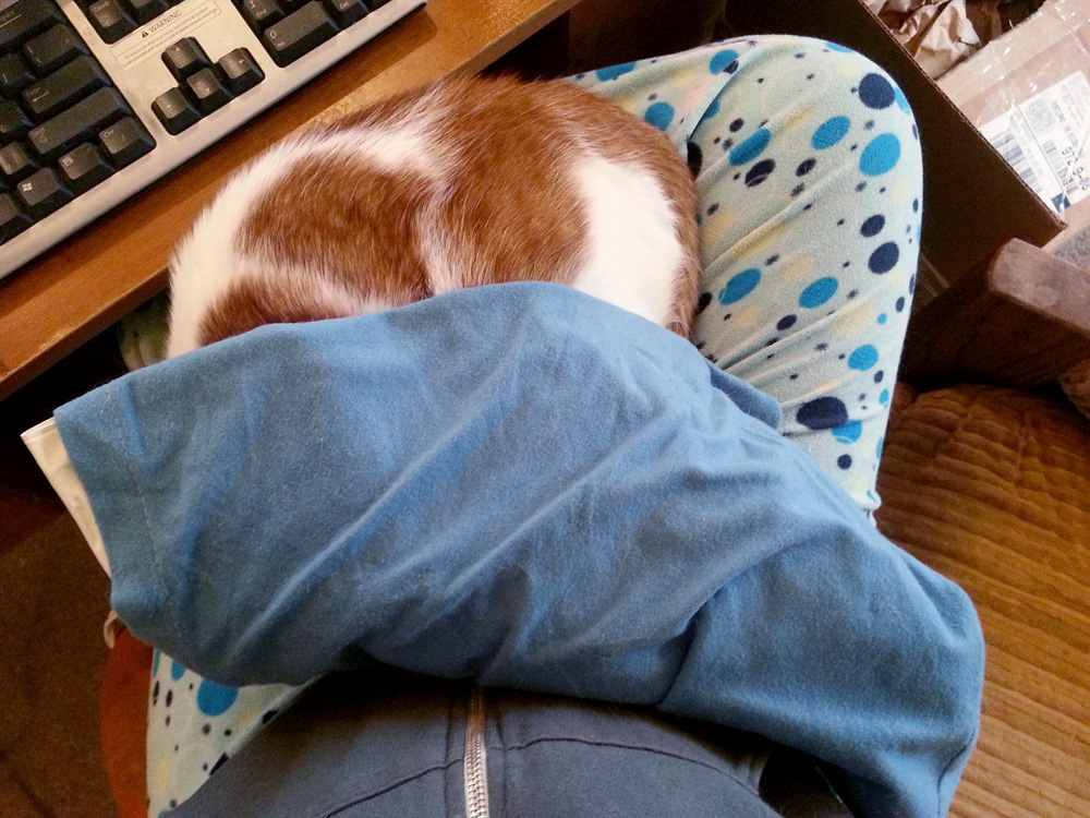 The heating pad thief, on my lap.